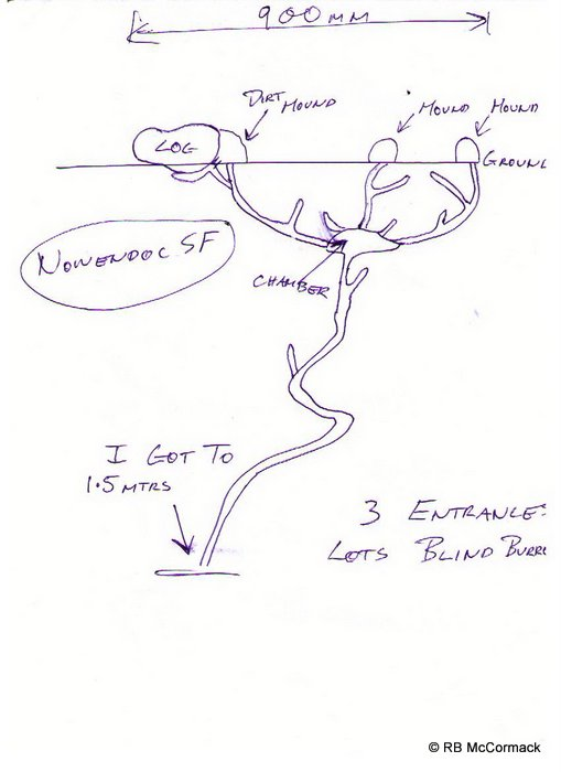 Typical burrow system sketch