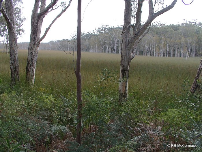 Typical coastal swamp habitat, Myall Lakes National Park
