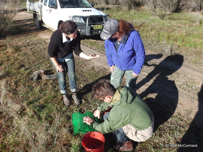 Felicity Sturgiss, Shelly Alderman and David Crass checking yabby traps Upper Shoalhaven Catchment