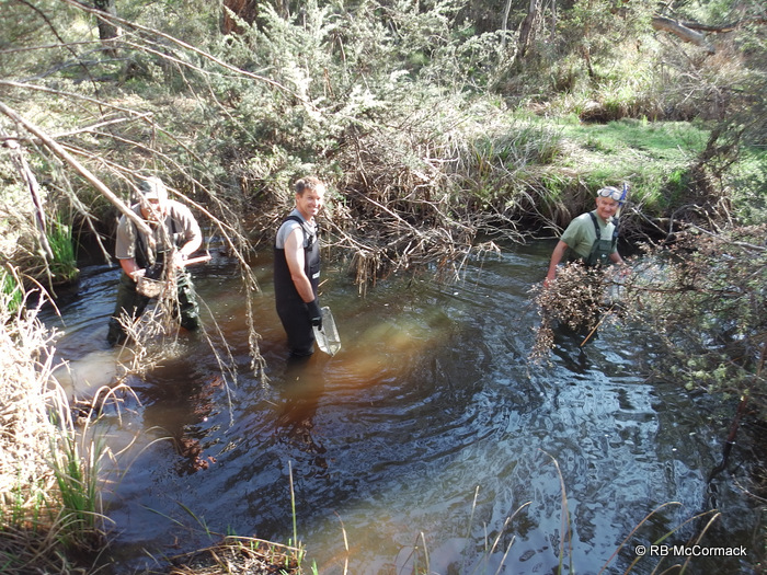 Craig Burnes, David Crass and Hugh Jones searching for freshwater mussels, upper Shoalhaven Rv