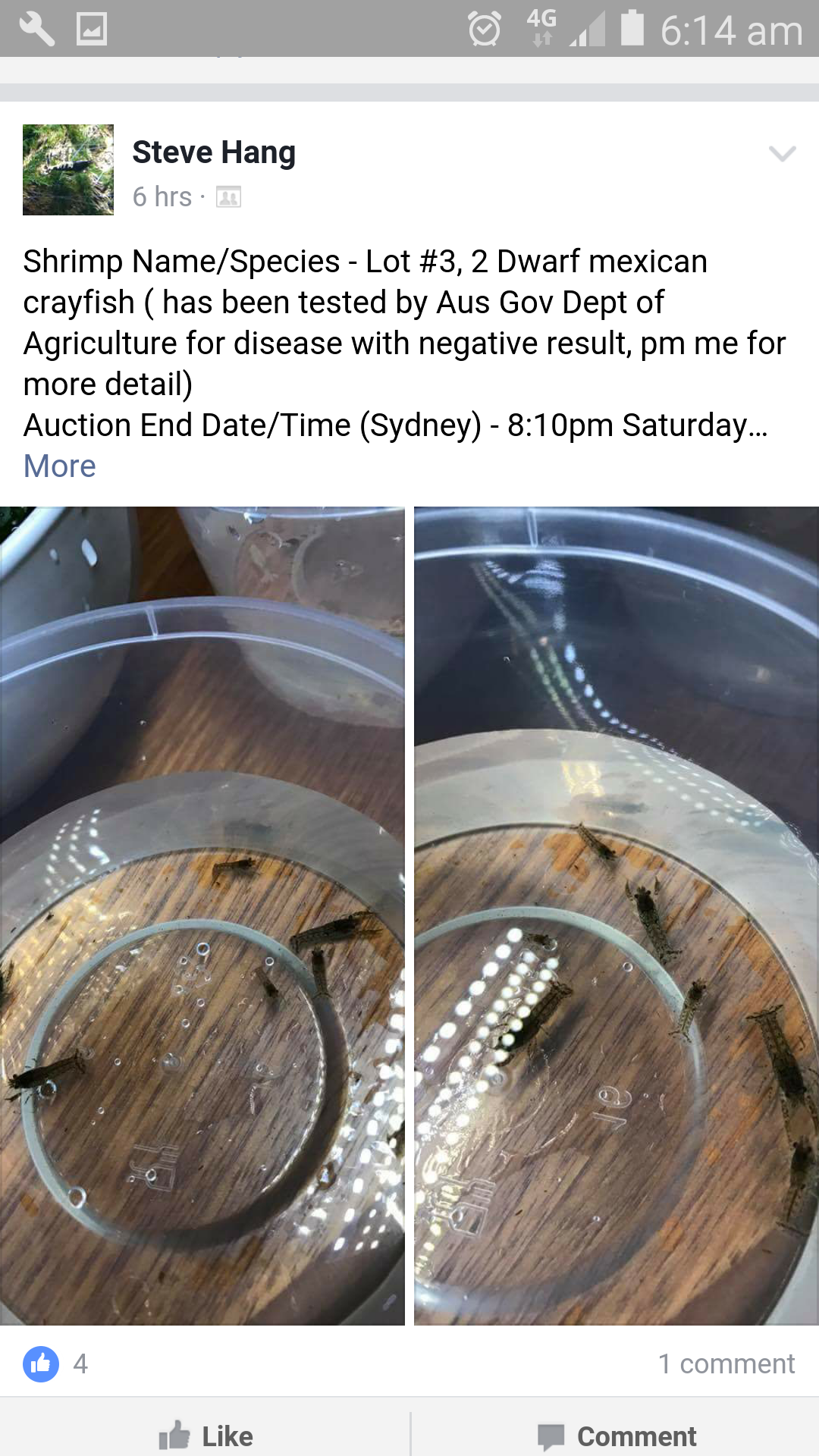 Exotic Dwarf Mexican Crayfish being sold of Facebook