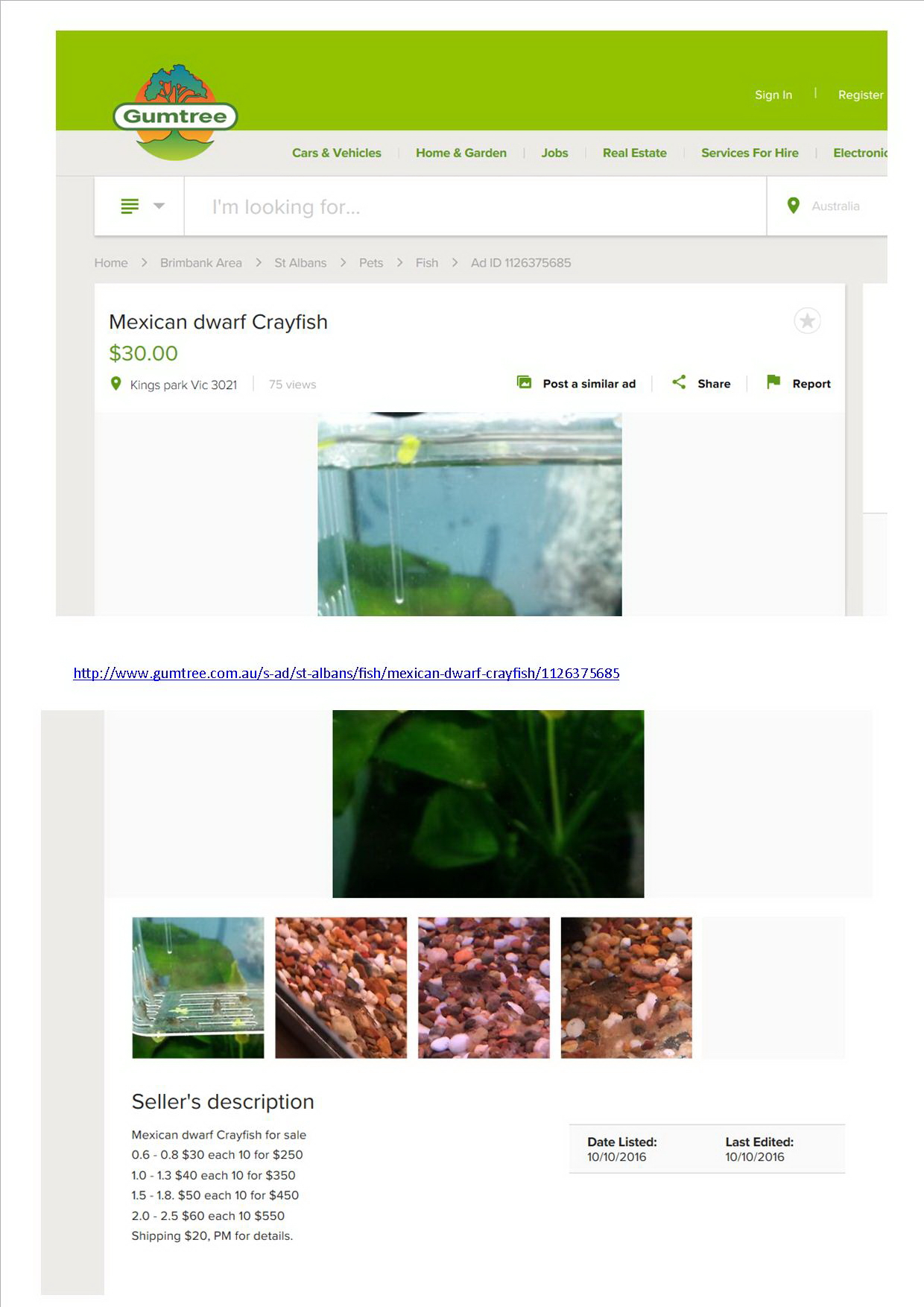 Exotic Dwarf Mexican Crayfish for sale on Gumtree