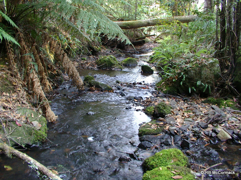 Dilgry River, Barrington Tops