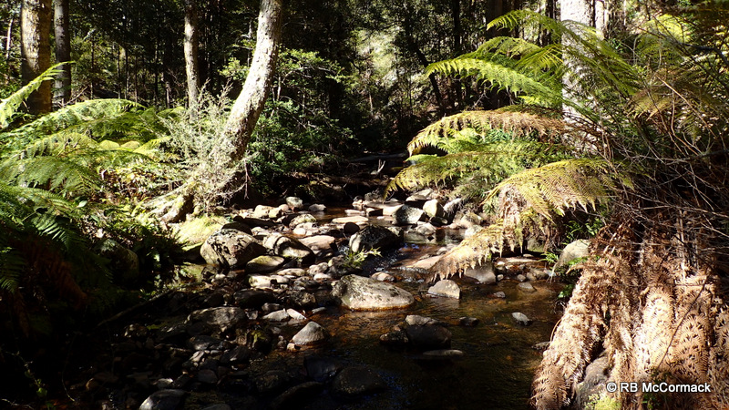 Paddys Creek, Barrington Tops